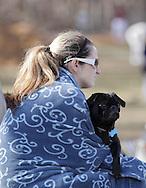 Middletown, New York - A woman uses a blanket to stay warm while holding her dog and watching a junior college baseball game on April 2, 2011.