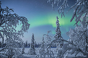 """THE MAGIC OF WINTERTIME IN FINNISH LAPLAND<br /><br />When she was a little girl, photographer Tiina Törmänen built castles out of snow. She spent her childhood in Finland's Southern Lapland, surrounded by lakes and forests, and each winter, she dug tunnels, doorways, and rooms, illuminated by flickering candlelight. She sang songs to her beloved dog Nappi on dark nights.<br /><br />Törmänen was a child of nature; she played with the dogs more than she did other children. She picked wild berries and mushrooms while her family fished and hunted and grew their own vegetables.<br /><br />After an Edenic childhood, the artist moved to Helsinki at sixteen. She survived an abusive relationship, one that she feels robbed her of her teenage years, a time that should have been happy but was instead plagued by fear.<br /><br />After fifteen years away, the artist made the choice to return home to the North of Finland. She associates the city in some ways with the """"dark times,"""" while in the countryside, home of the aurora borealis, she was able to find solace and comfort.<br /><br />When asked if her homecoming has helped to heal old wounds, the photographer suggests something a little more complicated. It takes time, and she's learning how to cope with the past, not to erase it. Every hardship, she says, has made her strong, and it's made her cherish the beautiful things in a world filled with ugliness. Most of all, she's forgiven herself.<br /><br />""""I have seen a lot shit in my life,"""" the artist writes, """"and after recovering from all that darkness, I'd rather share beauty.""""<br /><br />Winter is still her favorite season. When the snow falls, she bundles up and wanders into the unknown terrain. She met another dog who became her friend like Nappi. His name was Joppe, and until his passing at the age of fourteen, he spent many days exploring the frozen landscape by her side.<br /><br />In a way, after so many years, Törmänen has returned to her snow castle; only this time, it"""