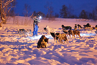Dogs Being Prepared for a Dog Sled Ride Outside Tromsø. Image taken with a Nikon D2xs and 50 mm f/1.4 lens (ISO 1000, 50 mm, f/1.4, 1/8 sec)..