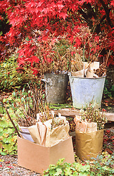 Collecting seeds in envelopes and buckets