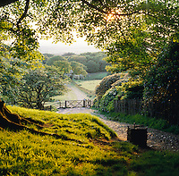 footpath with gate leading out of woodland on a summer evening, Lancashire