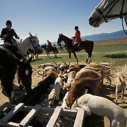 Members of a fox hunting club participate stop for water with their hounds during a hunt near Fort Tejon in California.