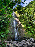Manoa Falls in Honolulu Watershed Forest Reserve, island of Oahu, Hawaii, USA. Walk 1.6 miles round trip with 800 feet gain to see Manoa Falls, a waterfall of Waihi stream in Manoa Valley. The 100-foot high Manoa Falls nestles in a lush tropical rainforest in Oahu's Koolau mountains. This image was stitched from multiple overlapping images.