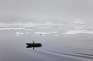 Tim piloting a Zodiac in very still waters off Peter 1 Øy, Phantom Coast, Western Antarctica