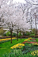 Keukenhof Spring Tulip Gardens, Lisse, The Netherlands.