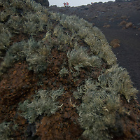 Wind whips lichens on a boulder near Whaler's Bay on Deception Island, a a recently active volcanic caldera in Antarctica.