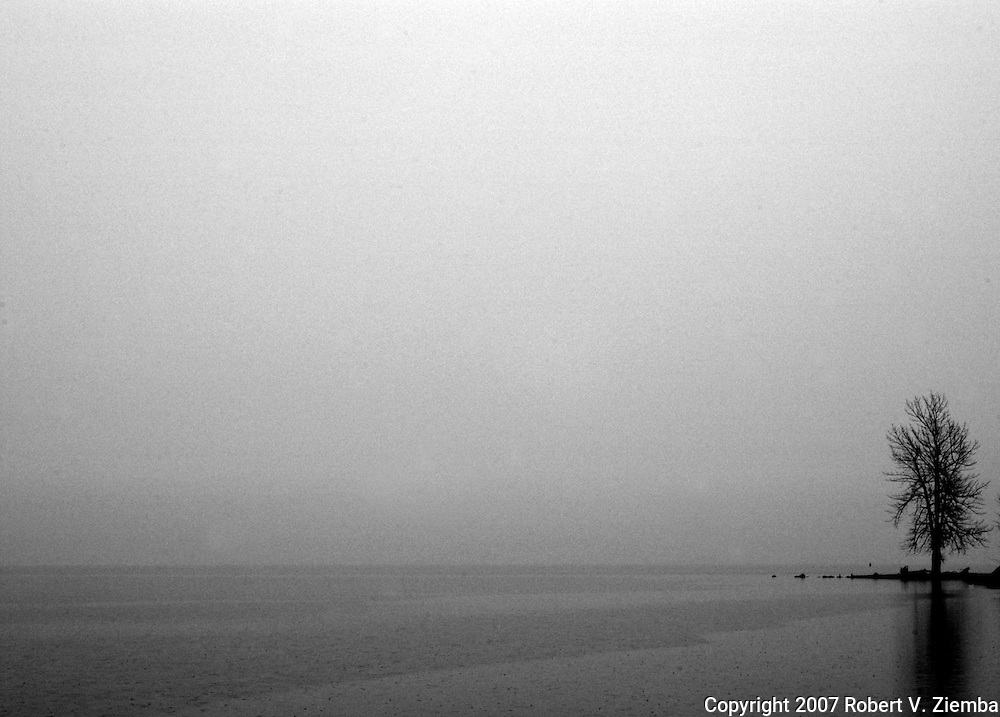 """""""Ausable Point(Alone)""""-A minimal black and white image of a tree on Ausable Point jutting out into Lake Champlain in the foggy rain."""
