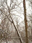 Snow covered woods scene, Fitchburg, Wisconsin, USA.
