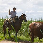 gauchos driving cattle, South America, Uruguay, Rocha,