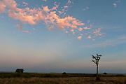 Just before sunrise in Maasai Mara, Kenya.