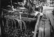Man tends to garden elevated over the monsoonal flood waters of Tonle Sap in Chong Kneas, Cambodia.  All activity has to make accomodation to the ever present waters of Tonle Sap.
