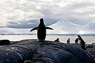 Cruise on a boat in Antarctica ANT01A
