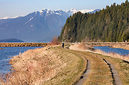 A woman walks along the dyke trail on the Katzie Marsh Loop.  Photographed in the Katzie Marsh (next to Pitt Lake) in Pitt Meadows, British Columbia, Canada.  Osprey Mountainof the Garibaldi Ranges is in the background behind Pitt Lake.