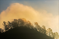 Cloud at sunrise over tree-lined hilltop near Chinese Camp in the Sierra foothills, Toulumne County, California