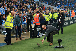 24th October 2017 - Carabao Cup (4th Round) - Manchester City v Wolverhampton Wanderers - A member of the ground staff tries to catch a squirrel on the pitch before the match - Photo: Simon Stacpoole / Offside.
