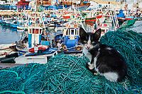 Maroc, Tanger, le port de peche // Morocco, Tangier (Tanger), Fishing harbour