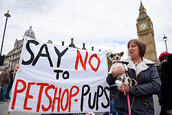 © Licensed to London News Pictures. 05/05/2017. London, UK. Izzy, the rescue-dog terrier, joins dog lovers gathered outside the Houses of Parliament to call for a ban on pet shops to stop selling puppies and puppy farming. Photo credit : Stephen Chung/LNP