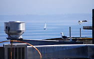 Framed by Cannery Row rooftops and resident seagulls, a sailboat cruises the calm morning waters of Monterey Bay