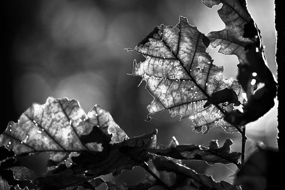 """""""When the leaves fall from the oak,"""" says one Czech proverb. """"Good that it does not happen"""", I said."""