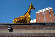 Lego giraffe outside Legoland in Birmingham, United Kingdom. Lego A/S is a Danish toy production company based in Billund. It is best known for the manufacture of Lego-brand toys, consisting mostly of interlocking plastic bricks. The Lego Group has also built several amusement parks around the world, each known as Legoland, and operates numerous retail stores.