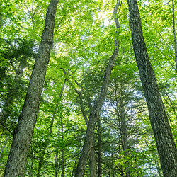 A forest in Jackson, New Hampshire. White Mountains.