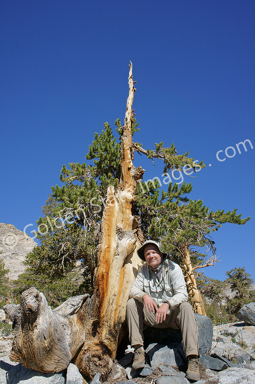 Photographer Randy Morse sitting next to a true high country survivor.  <br /> <br /> Species: Juniperous occidentalis