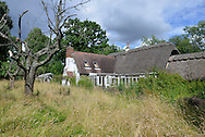 An example of a country garden hay meadow