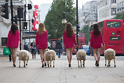 © licensed to London News Pictures. London, UK 11/10/2012. M&S models walking with a flock of sheep in Oxford Street in support of The Campaign for Wool's Week. M&S calling on the British public to 'shwop' unwanted woollen items to be reused, recycled or resold through the M&S and Oxfam partnership. Photo credit: Tolga Akmen/LNP