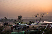 13th Jan 2015, Yamuna River, New Delhi, India. A view of the elephant handlers camp by the Yamuna River at dusk, New Delhi, India on the 13th Jan 2015<br /> <br /> Elephant handlers (Mahouts) eke out a living in makeshift camps on the banks of the Yamuna River in New Delhi. They survive on a small retainer paid by the elephant owners and by giving rides to passers by. The owners keep all the money from hiring the animals out for religious festivals, events and weddings, they also are involved in the illegal trade of captive elephants.. The living conditions and treatment of elephants kept in cities in North India is extremely harsh, the handlers use the banned 'ankush' or bullhook to control the animals through daily beatings, the animals have no proper shelters are forced to walk on burning hot tarmac and stand for hours with their feet chained together. <br /> <br /> PHOTOGRAPH BY AND COPYRIGHT OF SIMON DE TREY-WHITE, a photographer in Delhi<br /> + 91 98103 99809<br /> email: simon@simondetreywhite.com