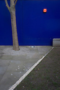 An urban tree is protected from a construction site by blue hoarding panels in the City of London.