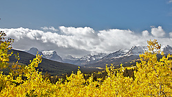 Golden Aspen, Cutbank Canyon, Glacier National Park