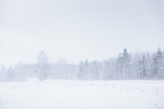 Sudden white snowstorm blows over fields and forests in Vidzeme, Latvia Ⓒ Davis Ulands | davisulands.com