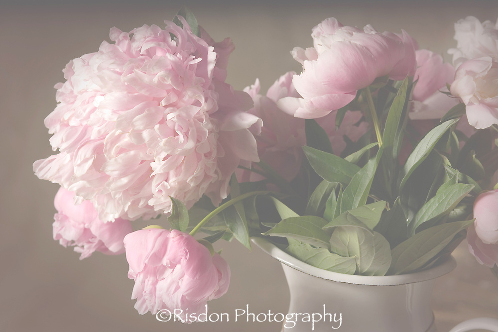 Still life of pink peonies in metal vase with fog filter