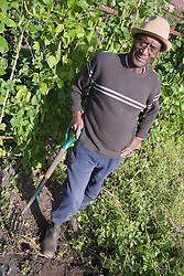 Older man on his allotment,
