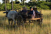 Peanut farmers in cart, going home from harvest time, Bagan, Myanmar