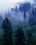 Fog hanging among trees near Newfound Gap, Great Smoky Mountains National Park, Tennessee.