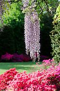 Brooklyn Botanic Garden Blooms