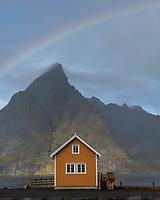Yellow Rorbu cabin with Osltind mountain peak in background, Sakrisøy, Lofoten Islands, Norway
