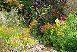 Hot borders at Glebe Cottage. Dahlia 'Bishop of Llandaff', Rudbeckia fulgida var. deamii, crocosmias, gladiolus and Cotinus coggygria Purpureus Group