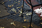 Leaves and wrought-iron chair in autumn - winter.