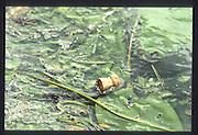 Henley on Thames. United Kingdom. Champagne cork floating with the flotsam 1990 Henley Royal Regatta, Henley Reach, River Thames. 06/07.1990<br /> <br /> [Mandatory Credit; Peter SPURRIER/Intersport Images] 1990 Henley Royal Regatta. Henley. UK