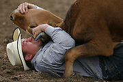 062109-Evergreen, Colo.-steerwrestling-Joe Spanel from Wellington, CO wrestles a steer to the ground during the 2009 Evergreen Rodeo PRCA Steer Wrestling Competition Sunday, June 21, 2009 at The Evergreen Rodeo Grounds..Photo By Matthew Jonas/Evergreen Newspapers/Photo Editor