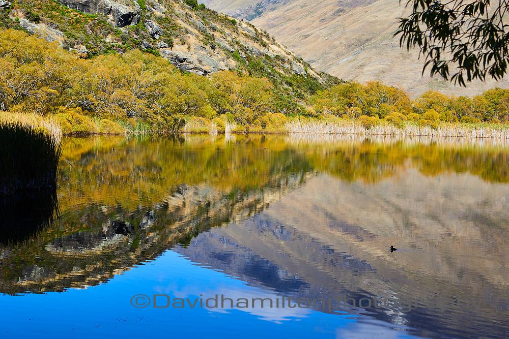 Lake Wanaka Reflection