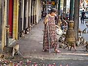30 NOVEMBER 2014 - LOPBURI, LOPBURI, THAILAND:  A woman walks down the street in a crowd of long tailed macaque monkeys after the annual monkey buffet party in Lopburi, Thailand. Lopburi is the capital of Lopburi province and is about 180 kilometers from Bangkok. Lopburi is home to thousands of Long Tailed Macaque monkeys. A regular sized adult is 38 to 55cm long and its tail is typically 40 to 65cm. Male macaques weigh around 5 to 9 kilos, females weigh approximately 3 to 6 kg. The Monkey Buffet was started in the 1980s by a local business man who owned a hotel and wanted to attract visitors to the provincial town. The annual event draws thousands of tourists to the town.   PHOTO BY JACK KURTZ