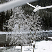 Noorwegen Gol 27 december 2008 20081227 Foto: David Rozing .Wintertafereel, stilleven van aangevroren knijpers aan waslijn door strenge vrieskou.Wintertime, stills of frozen clips on clotheslines and frozen trees.Foto: David Rozing