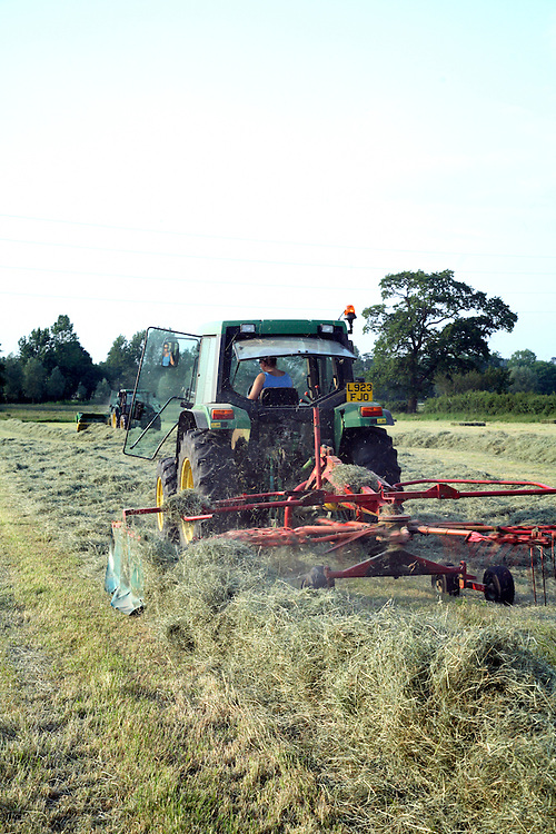 Farm worker rowing hay ready for baling with tractor