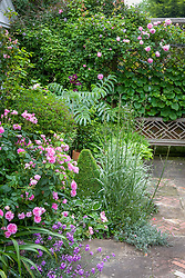 Planting on terrace with Rosa 'Ispahan' in the foreground and R. 'Constance Spry' over bench