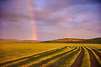 Mongolie, Province du Khentii, paysage dans la steppe // Mongolia, Khentii province, landscape in the steppe