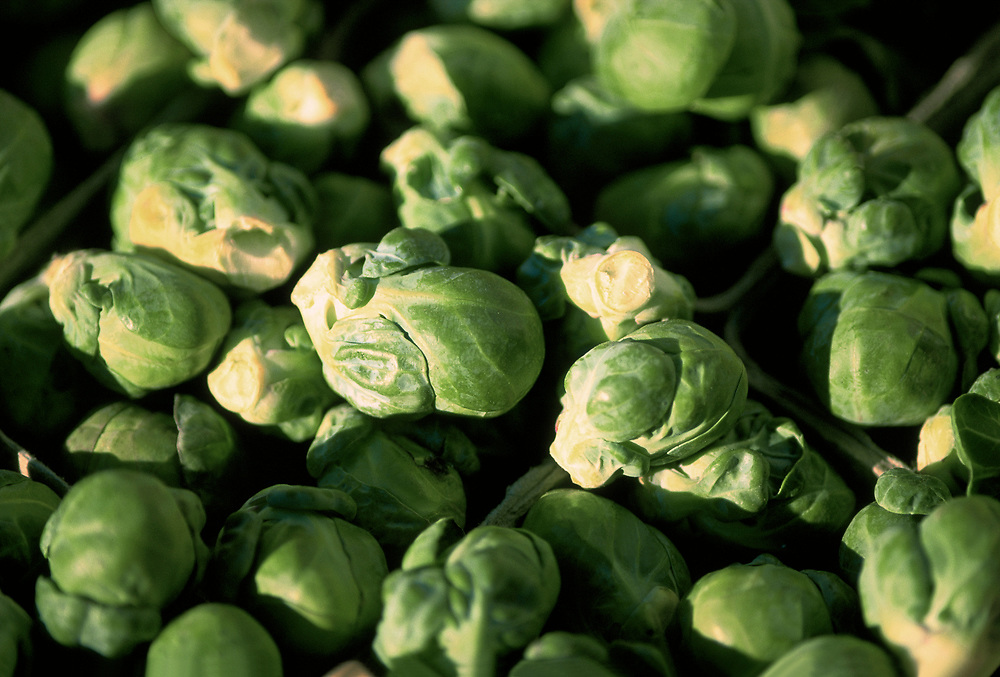 Close up selective focus photograph of a pile of Brussel Sprouts