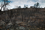 Fire Damaged landscape on 18th September 2017 in Narbonne, France. The fire was caused by drought conditions and high winds near to the French town of Narbonne, destroying over 400 hectares of scrubland.